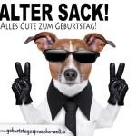 Geburtstagswünsche als Spruchbild - Cooler Hund mit Sonnenbrille