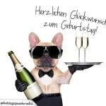 Cooler hund als Glückwunschkarte zum Geburtstag