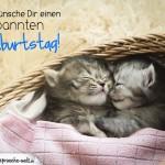 Geburtstagskarte mit Katzenbabys