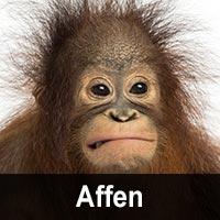 Geburtstagskarten mit Affenmotiven