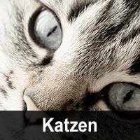 Geburtstagskarten mit Katzenmotiv