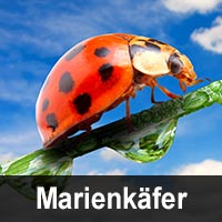 Geburtstagskarten mit Marienkäfer