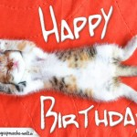 Happy Birthday - Katze schläft auf roter Decke auf dem Rücken