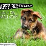 Karte zum Geburtstag mit Hund