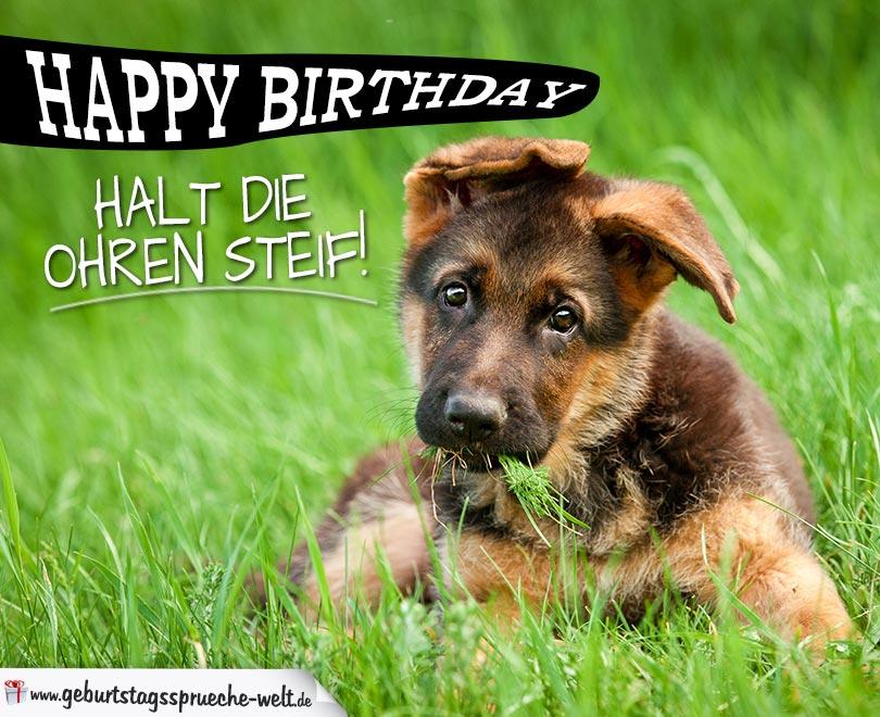 Happy Birthday Halt Die Ohren Steif Spruche Zum Geburtstag